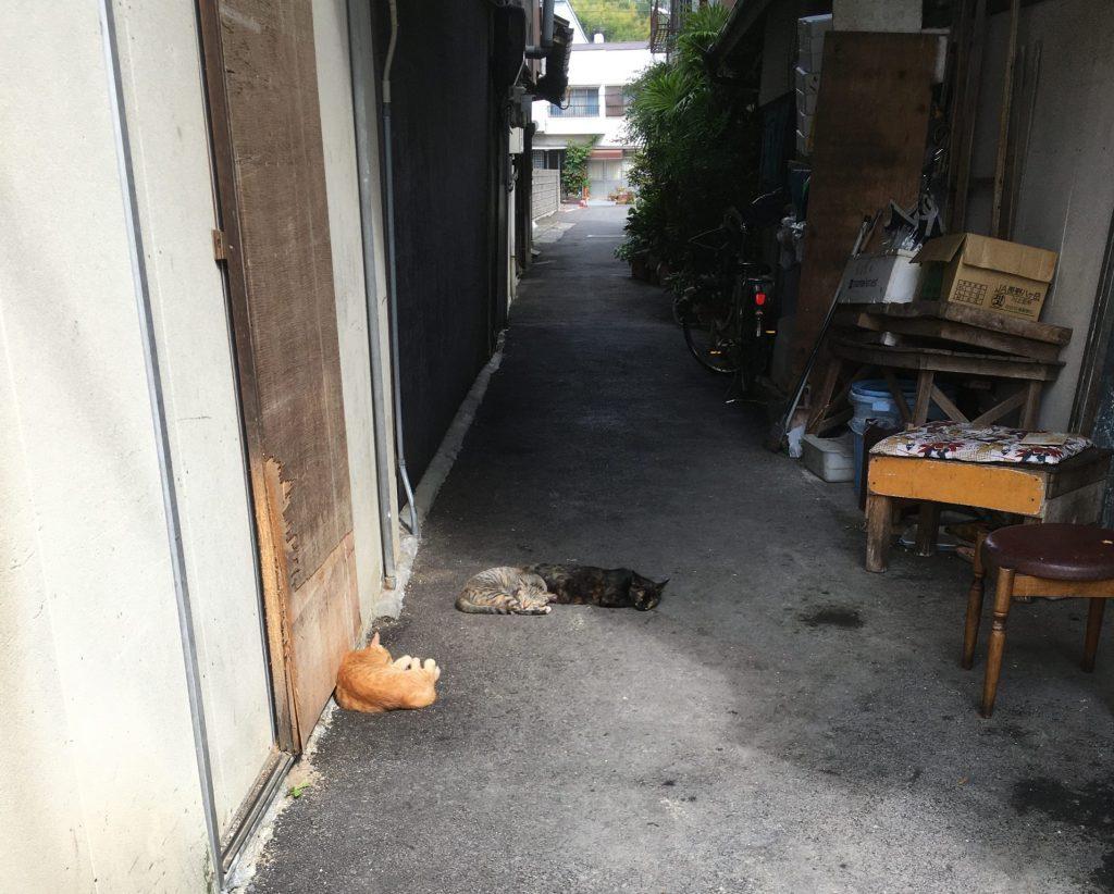 三津浜猫1