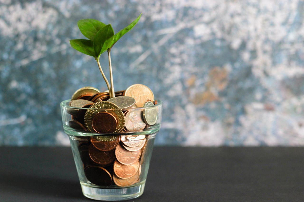 お金と植物の芽