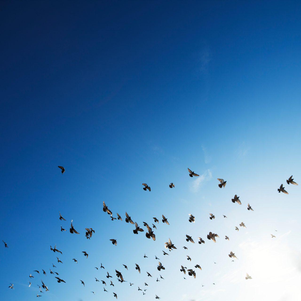 飛び立つ鳥たち